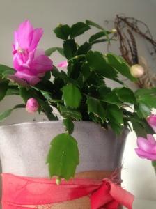 bloom.tuihealthcare